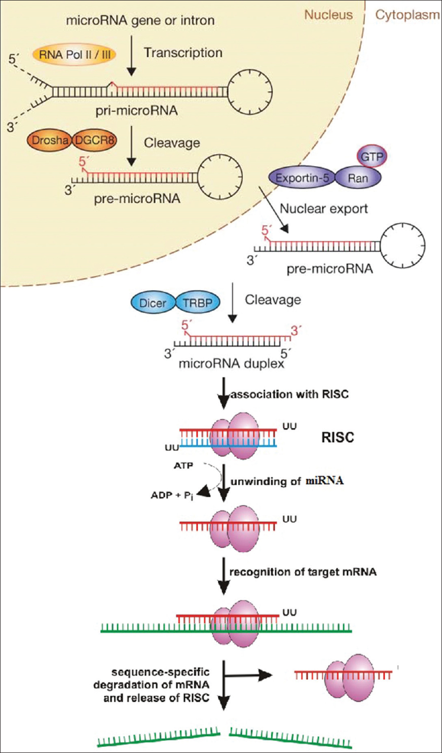 Applicability of RNA interference in cancer therapy: Current
